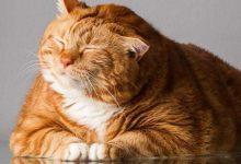 Kedinizin Sizi Sevdiğini Gösteren Davranışlar Nelerdir?