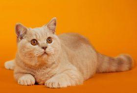 Kedi Parazit Türleri ? Dış Parazit Tedavisi