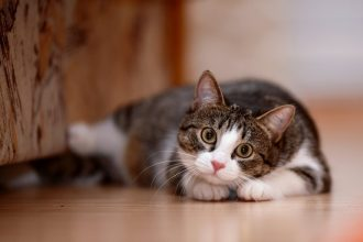 Kedilerin Tüy Dökmemesi İçin Ne Yapılmalıdır?