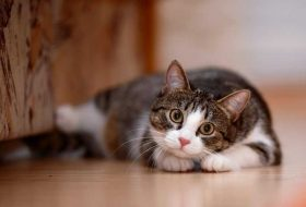 Kediler Pirelenince Ne Yapılması Gerekir?