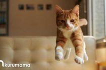 Kedilerin Daha Uzun ve Sağlıklı Yaşaması İçin Yapmanız Gereken 5 Şey