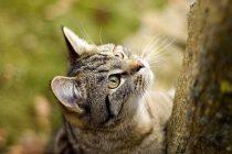 Kedilerde Şeker Hastalığı Belirtileri ve Tedavisi