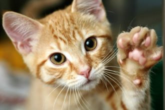Kedilerde soğuk algınlığı neden olur?