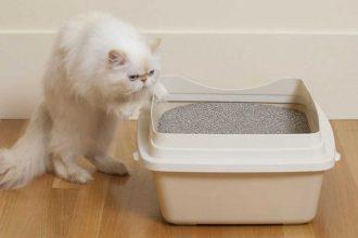 Kedilere Tuvalet Eğitimi Nasıl Verilir?
