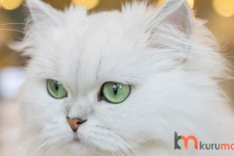 Kedilerde Neden Tüy Dökülür?