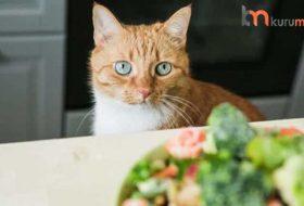 Zayıf Kedilerin Kilo Almasına Yardımcı Olan 5 Kedi Maması Tavsiyesi