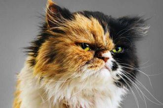 Kedilerde Cinsiyet Ayrımı Nasıl Yapılır? Kedi Özellikleri