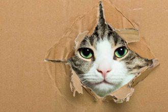 Kedinize ne kadar zaman ayırıyorsunuz?