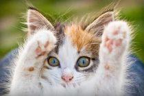 Kedilerinize ne kadar zaman ayırıyorsunuz?