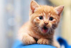 Kedinizin maması organik mi?
