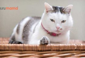 Kısırlaştırılmış Kedilere Özel Üretilen En İyi 5 Kedi Maması