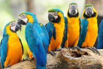 Konuşturmak İçin En İdeal 3 Kuş Türü
