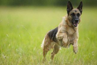 Köpeği kaybetmek neden çok zordur?