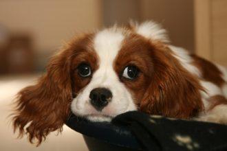 Köpeğin sahibinden 10 ricası
