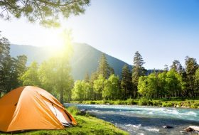 Köpeğinizle kamp yaparken nelere dikkat etmelisiniz?