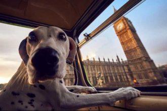 Köpeğinizle seyahat etme tüyoları