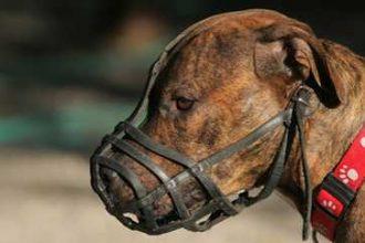 Köpek Ağızlığı Nasıl Kullanılır? Köpek Ağızlığı Nasıl Seçilir?
