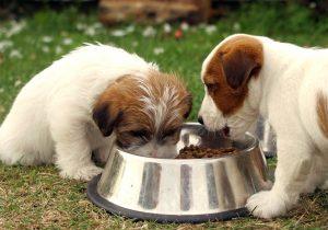Köpekler İçin Aksesuar Seçimi Nasıl Olmalıdır?