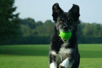 Köpeklerde eğitimin önemi