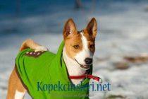 Köpeğinizin Tarzını Yansıtan Birbirinden Güzel 10 Köpek Kıyafeti