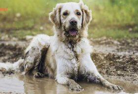 Köpek Kokusu Sorunu Yaşayanlar İçin 10 Altın Tavsiye