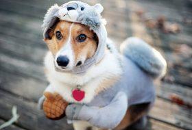 Köpek mamasının taze olmasının önemi