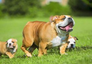 Köpek Sahiplenmek
