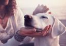 Köpekler Nasıl Sakinleştirilir? Köpek Sakinleştirme Teknikleri