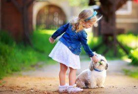 Köpekler Neden Kokar? Köpeklerde Koku Yapan Hastalıklar