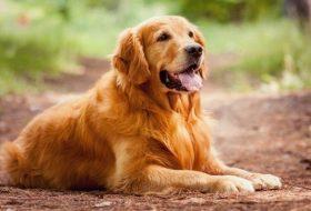 Köpekler Neden Toprak Yer?