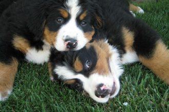 Köpekler de psikolojiden anlar