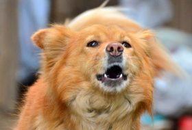 Köpeklerin yeni mekanlara adaptasyon süreci