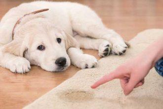Köpeklerde ayrılık korkusu