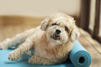 Köpeklerde beslenme ve mama seçimi nasıl olmalıdır?