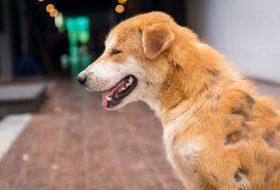 Köpeklerde Deri Hastalıkları Neden Oluşur ?