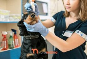 Köpeklerin Göz Bakımı Nasıl Yapılır? Göz Temizleme Solüsyonun Önemi