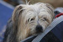 Köpeklerde Hastalık Tedbirleri