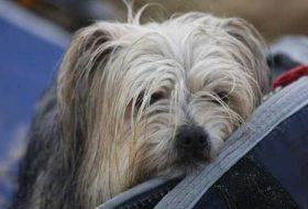Köpekleri Hastalıktan Korumak İçin Yapılması Gerekenler