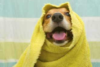 Köpeklerde sağlık