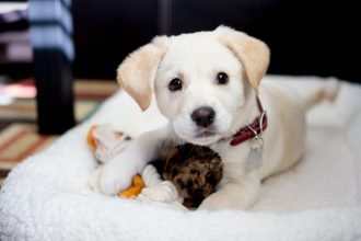 Köpeklerde vücut dili