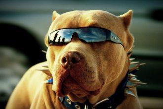 Köpekleri serinleten fikirler