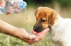 Köpeklerin Yeteri Kadar Su İçmesi İçin Ne Yapılmalıdır?