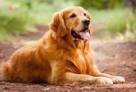 Köpeklerle ilgili bilinmesi gereken pratik bilgiler