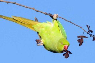 Kuş beslemenin faydaları