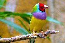 Kuş kafesi nasıl seçilir?
