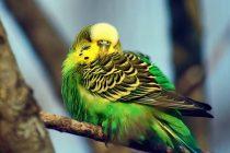 Kuşlarınız için her şey