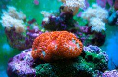 Mercan neyle beslenir, bakımı nasıl yapılır?