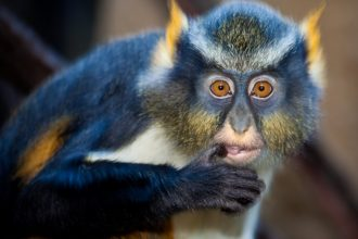 Dünyanın en ilginç ve en pahalı evcil hayvanları