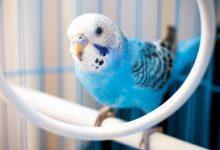 Muhabbet Kuşları İçin Oyuncak Seçimi Nasıl Yapılmalıdır?