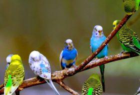 Kuşlarınıza iyi bakın